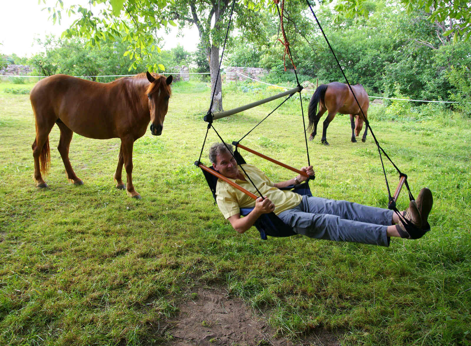 Pferde, Entspannung, Wiese